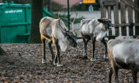 Gyvūnų Kalėdos zoologijos sode