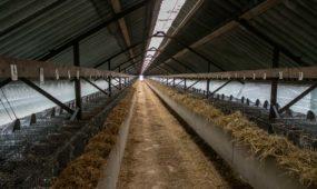 Audinių ferma (Vilkijos ūkis)