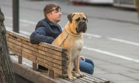 Šuo laisvės alėjoje