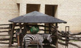Lietuvos zoologijos sodo 80-mečio šventė