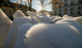 Rotušės aikštėje kyla Kauno kalėdinė eglutė