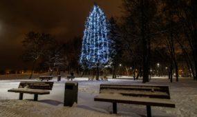 Kauno miesto ir rajono eglutės