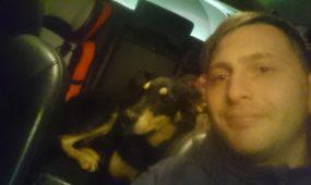 Panemunėje rastas šuo