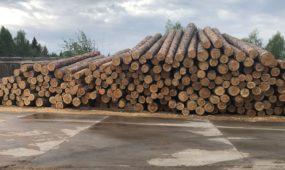 Sukčiavusios įmonės, mediena