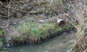 Gričiupio upelis to paties pavadinimo parke