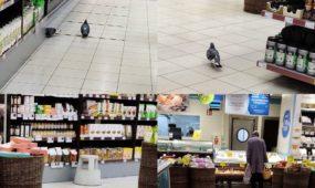 """Balandis """"Rimi"""" parduotuvėje"""