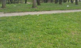 Šiukšlės daukiabučio kieme