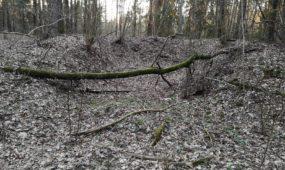 Miško duobės