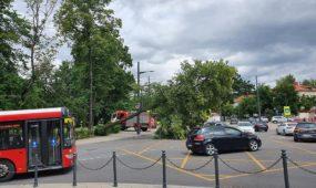 Parodos gatvėje nuvirto medis