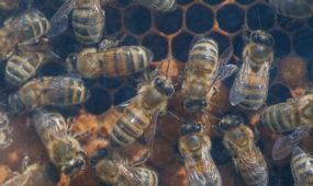 Bitės Istorinės LR Prezidentūros kiemelyje