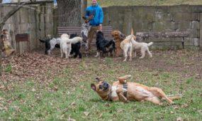 Šunų darželis Panemunėje