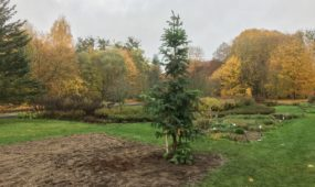 Naujas augalas VDU Botanikos sode