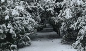 Skaitytojai dalinasi žiemos vaizdais
