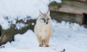 Zoologijos sodo gyvūnai žiemą