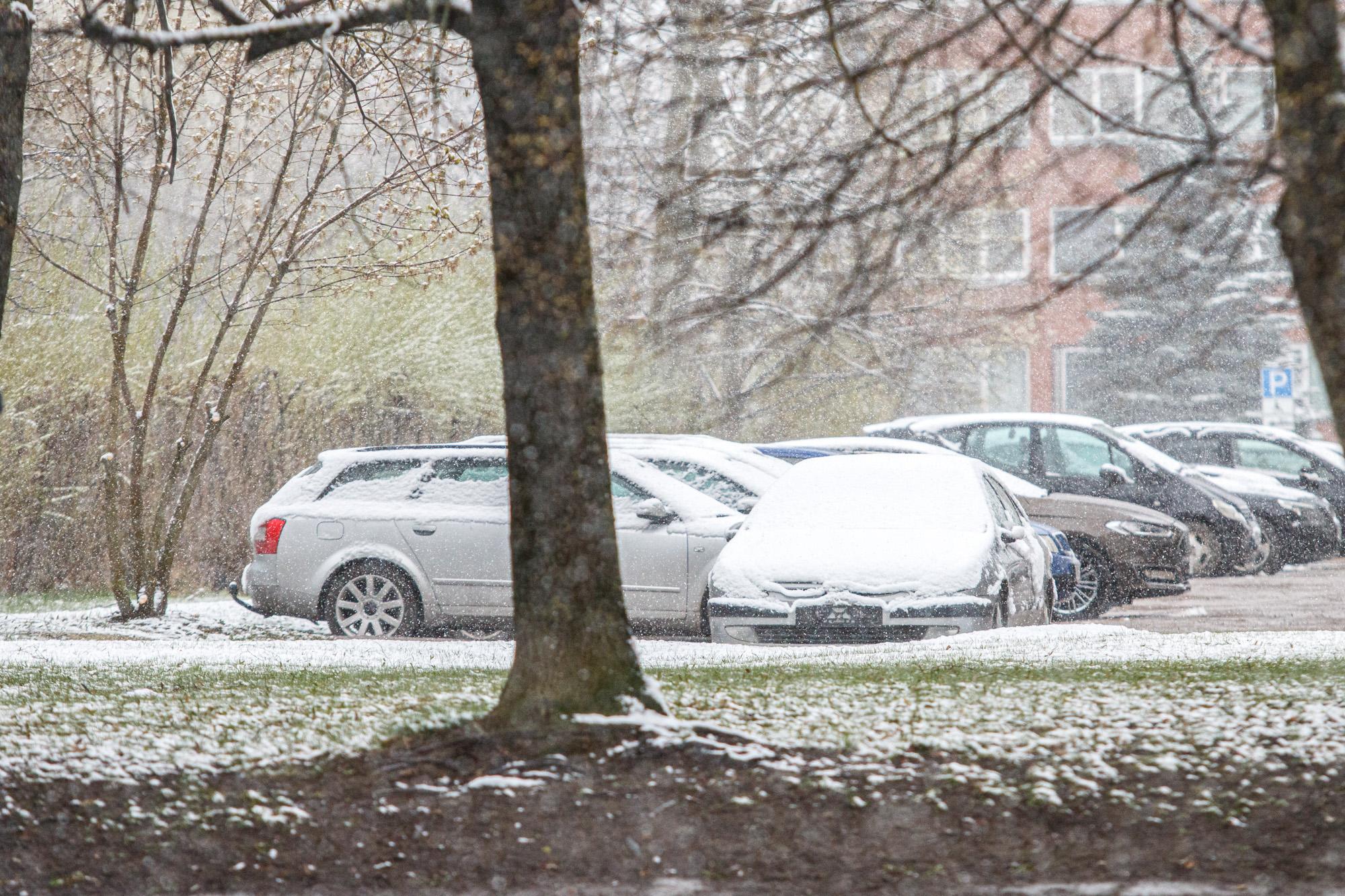 Pavasarinis sniegas