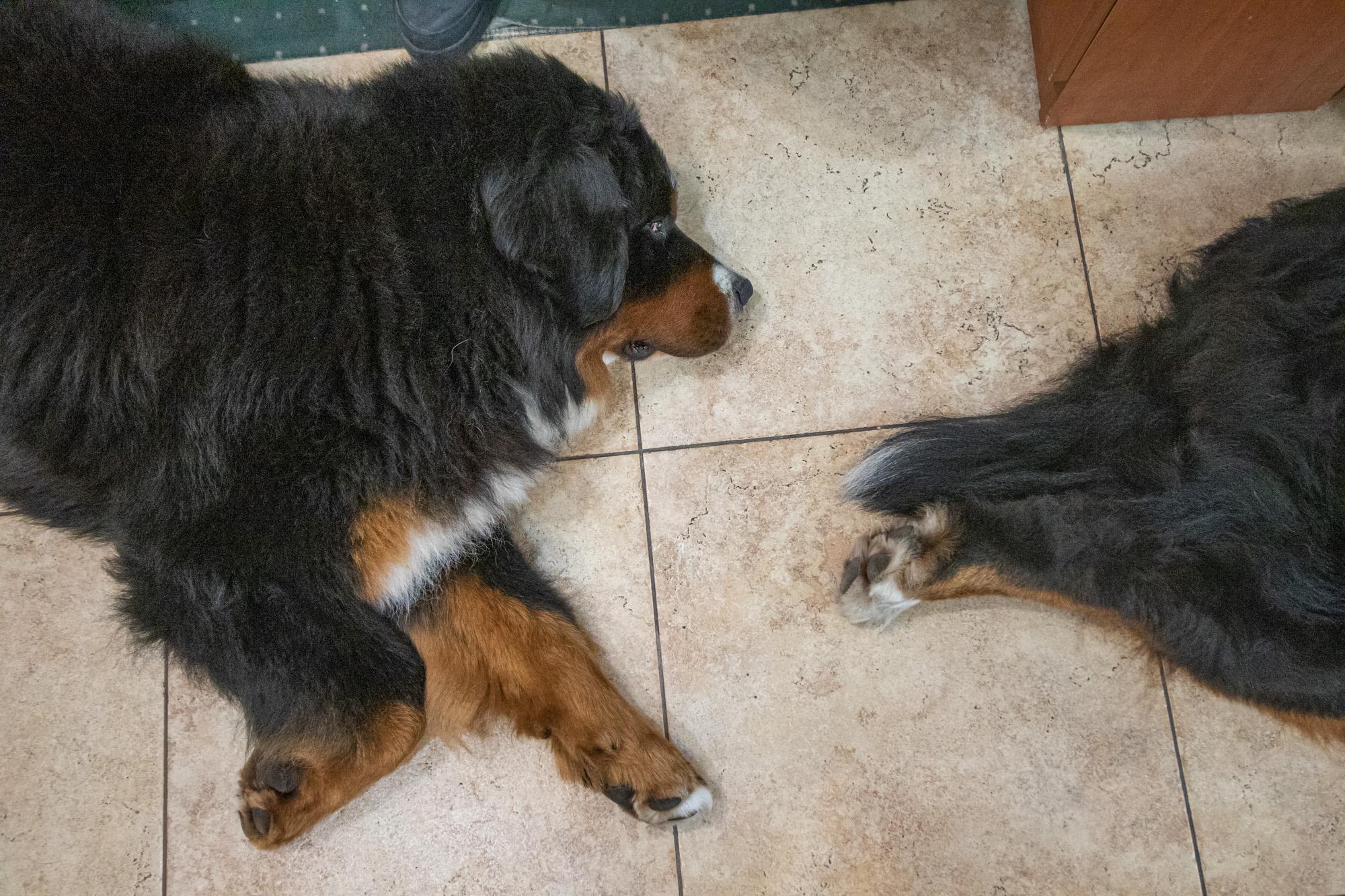 Šunų kaniterapija